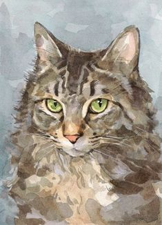 Maine Coon, watercolor by David Scheirer.