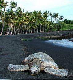 Punaluu Black Sand Beach, Hawaii