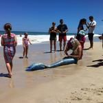 Perth, Mermaid Art, Family Kids, Amelia, Mermaids, Her Hair, Html, Summer Time, Waves