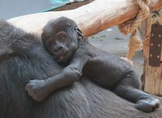 Ajabu - Zoo Praha , Prague zoo