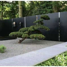 sculpted pine and creased steel and mirror wall zen garden Modern Landscaping, Backyard Landscaping, Back Gardens, Outdoor Gardens, Zen Gardens, Japanese Gardens, Dream Garden, Home And Garden, Japanese Garden Design