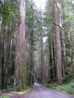Three Day Itinerary on the Redwood Coast