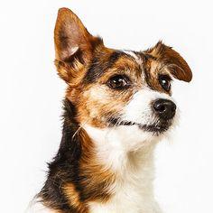 terriers - love