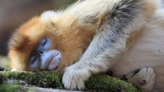 Humans sleep more deeply but for shorter periods than other primates' habits, a study finds. The pattern may have helped humans evolve more powerful brains.