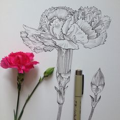45 Creative Tattoo Drawings For Your Inspiration - Tattoo :) - Minimalist Tattoo Plant Drawing, Painting & Drawing, Ink Drawings, Drawing Sketches, Geometric Tatto, Small Shoulder Tattoos, Illustration Botanique, Flower Sketches, Drawings Of Flowers