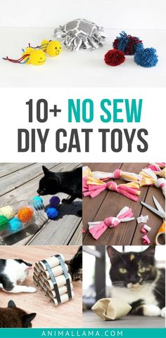 Keep your cat entertained with these simple and easy, no-sew DIY cat toys that are made out of household items! #diy #cats #cattoys #diycat #diycattoy #outdoorcattoys