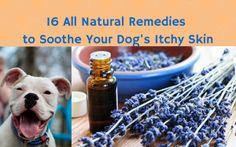 16 all-natural remedies to soothe your dog's itchy skin (hint: most of them are free) | Ruff Ideas
