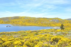 Hiken in #Portugal: De 4 mooiste natuurparken - via Food Travel Photography 02.08.2016    Portugal is de ultieme bestemming om je onder te dompelen in de natuur. Behalve de bekende Algarve en de Dourorivier heeft Portugal een berglandschap dat ik in eerste instantie niet bij Portugal had verwacht. En ook op een klein oppervlake is de natuur elke keer weer anders. Ik bezocht 4 wonderschone natuurparken en ik ben er nog steeds niet over uit welke nou het mooist is…
