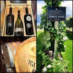 Wine Vineyards, Luxury Condo, Pinot Noir, Wine Making, Wine Cellar, Wine Country, Wine Rack, Places Ive Been, Vines