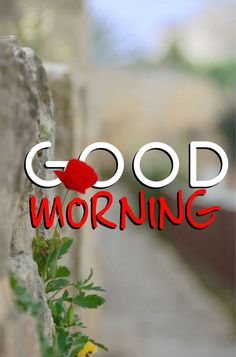 Good Morning Friends Quotes, Good Morning Funny, Morning Greetings Quotes, Good Morning Wishes, Good Morning Messages, Morning Quotes, Good Morning Beautiful Pictures, Latest Good Morning Images, Good Morning Photos