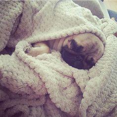 Sweet dreams pug peeps! Tag a friend who loves pugs too! Original by @pugsophietheme