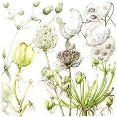 Botanical Art Card - Seedheads