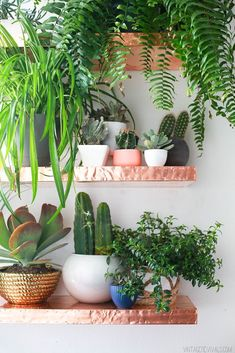 Awesome DIY copper shelves full of plants!