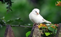 A very special sparrow: This albino bird has been accepted by the rest of the flock but some are rejected by their fellow sparrows