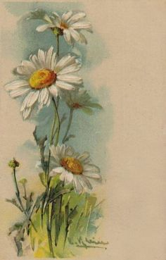 Катарина Кляйн (Catharina Klein, 1861-1929) by herminia Watercolor Cards, Watercolour Painting, Watercolor Flowers, Painting & Drawing, Daisy Painting, Daisy Drawing, Pastel Background, Arte Floral, Watercolor Landscape