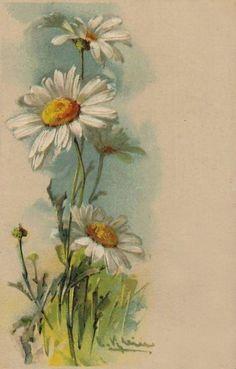 Катарина Кляйн (Catharina Klein, 1861-1929) by herminia Watercolor Art, Flower Painting, Art Painting, Art Drawings, Floral Art, Painting, Daisy Painting, Watercolor Landscape, Floral Watercolor
