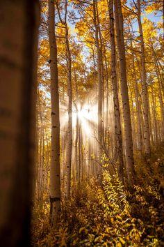 . Sunrises, Good Morning, Woods, Trees, Nature, Breaking Dawn, Bom Dia, Buen Dia, Bonjour