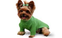 Gola Rolê para seu pet -  Visite nossa loja virtual http://luxusdog.bpg.com.br