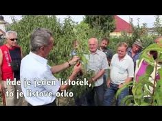 Ivan Hričovský: Aby broskyne rodili - YouTube Hana, Gardening, Youtube, Author, Garten, Lawn And Garden, Youtube Movies, Horticulture