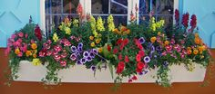 Yesterday my son and I headed to Busch Gardens in Williamsburg. When we left it was gloomy, overcast, chilly and very windy, I thought for. Window Box Flowers, Window Boxes, Flower Boxes, Flower Containers, Window Planters, Love Your Home, Dream Garden, Beautiful Gardens, Container Gardening