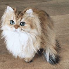 Kucing Lucu Imut Dan Paling Menggemaskan Sedunia