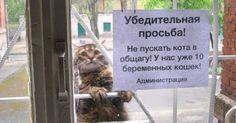 Сеть зоомагазинов и ветеринарных к