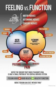 chiropractic is about structure and function