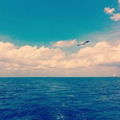 Scattered my grandpas ashes in the Bay of Galveston. Rest in paradise. #seagull #ocean