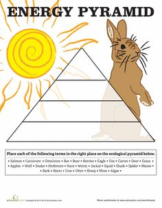 This worksheet describes the parts of the flower students color the worksheets energy pyramid fandeluxe Images