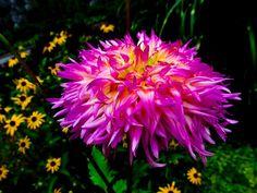 Beautiful purple flower  follow my photoblog - http://mtphoto.us