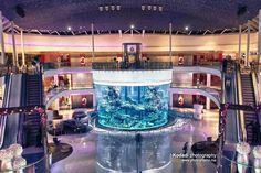 Le Morocco Mall et son aquarium géant ! Ce centre a été élu meilleur centre commercial du monde à plusieurs reprises