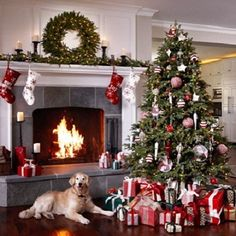 Choosing the right Christmas tree and holiday decorations Pet-proofing your home starts with buying the right tree and the safest ornaments. Here are some things pet owners should keep in mind when they go out to purchase their holiday pieces: 1. CONSIDER AN ARTIFICIAL CHRISTMAS TREE Most real Christmas trees have sharp needles that can scratch and puncture your pet's skin. Natural pine needles are also mildly toxic to animals; they can be dangerous if your dog or cat gobbles them up…