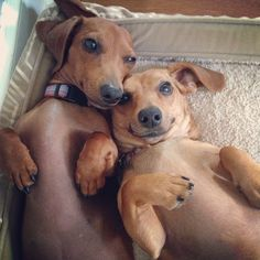 How cute are these Pets of the week? (Shared by jenmooney) Tag your pet photos with #BHGPets to share them with us!