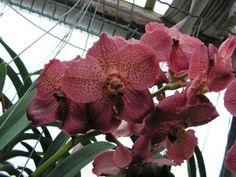 orchideen und garten on pinterest ebay orchids and php. Black Bedroom Furniture Sets. Home Design Ideas