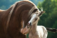 Pure horse love!