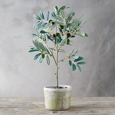 """Add dimension, and color to any room all year long with this faux olive tree that arrives in a rustic clay pot. - Polyester, wire, styrofoam, clay pot - Indoor use only - Imported 19.5""""H, 6.5"""" diameter"""