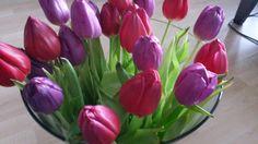Kijk! De eerste tulpenfoto's zijn er voor het nieuwe Droomlicht!