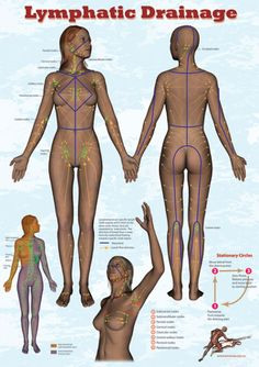 lymphatic drainage water sheds, and drainage fields.  VERY helpful for massage and body brushing!