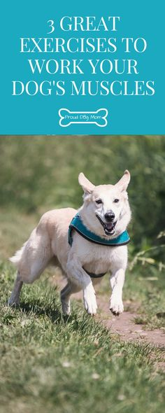 3 Great Exercises To Work Your Dog's Muscles | Dog Health Tips | Dog Exercises | @KaufmannsPuppy