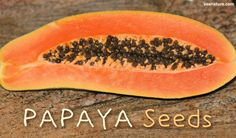 Health Benefits of Papaya Seeds (plus How to Eat Them)