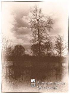 cool Fotografie »Traumwald Numero 3«,  #Naturansichten