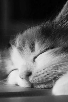 Well deserved siesta - cats and dogs - . Cute Kittens, Cats And Kittens, I Love Cats, Crazy Cats, Beautiful Cats, Animals Beautiful, Cute Baby Animals, Animals And Pets, Gatos Cats