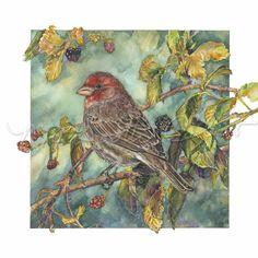 Bird - House Finch on Blackberries - Watercolor