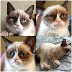 Her real name is Tardar Sauce , but we call her Grumpy Cat!