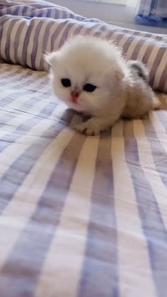 Cute Baby Cats, Baby Kittens, Kittens Cutest, Cats And Kittens, Cute Babies, Funny Cat Videos, Funny Cats, Baby Animals, Funny Animals