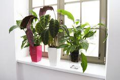 Piękno włoskiego designu w Twoim ogrodzie - Inspirowani Naturą | design flower pot by TeraPlast | TerraForm for your space