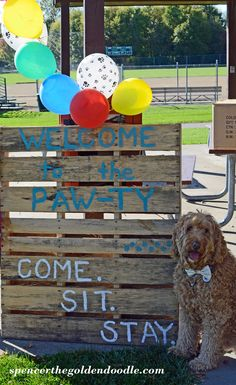 Welcome To The Paw-ty. Come. Sit. Stay. Everything you need to plan a dog themed birthday party. Spencer the Goldnedoodle shares ideas for decor, food, and activities. Simply click on the image to learn more. #dog #birthday #DIY #party