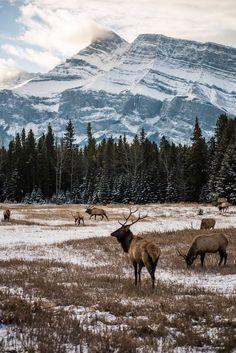 Banff National Park - Alberta, Canada