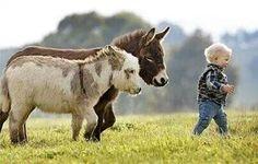 Little donkeys and boy