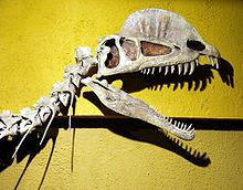 Dilophosaurus - Wikipedia, the free encyclopedia